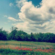 Texas. ©loveleemonicaa